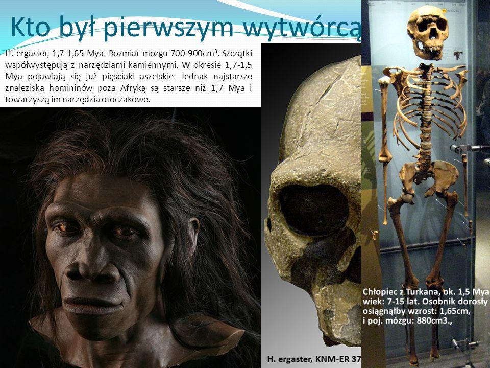? Kto był pierwszym wytwórcą narzędzi? H. ergaster, 1,7-1,65 Mya. Rozmiar mózgu 700-900cm 3. Szczątki współwystępują z narzędziami kamiennymi. W okres