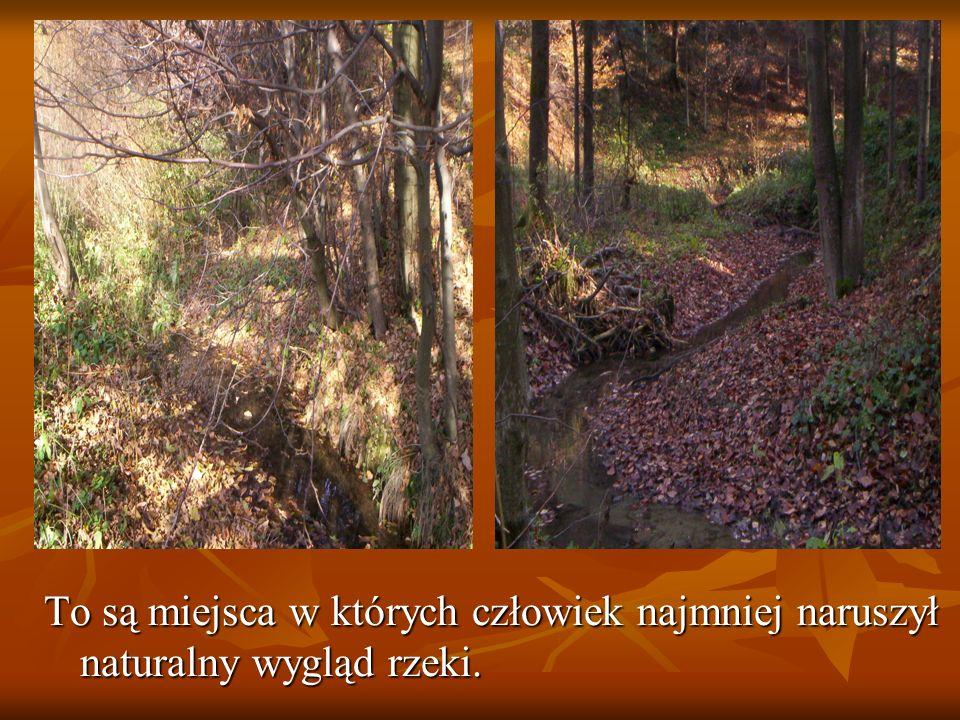 Rzeka zasila stawy hodowlane należące do prywatnego właściciela.