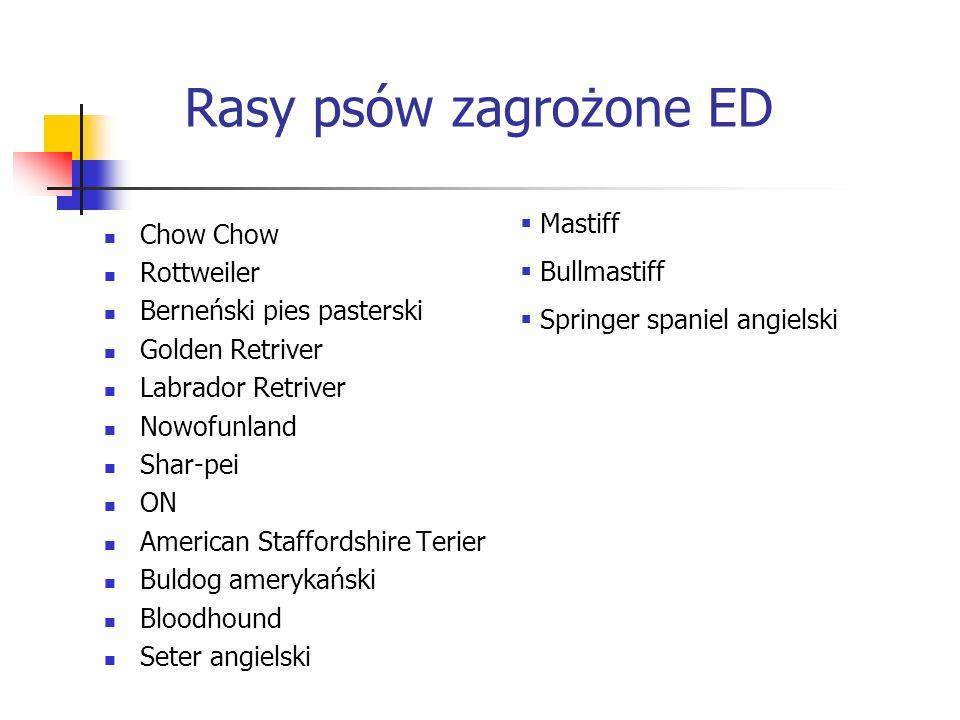 Rasy psów zagrożone ED Chow Chow Rottweiler Berneński pies pasterski Golden Retriver Labrador Retriver Nowofunland Shar-pei ON American Staffordshire