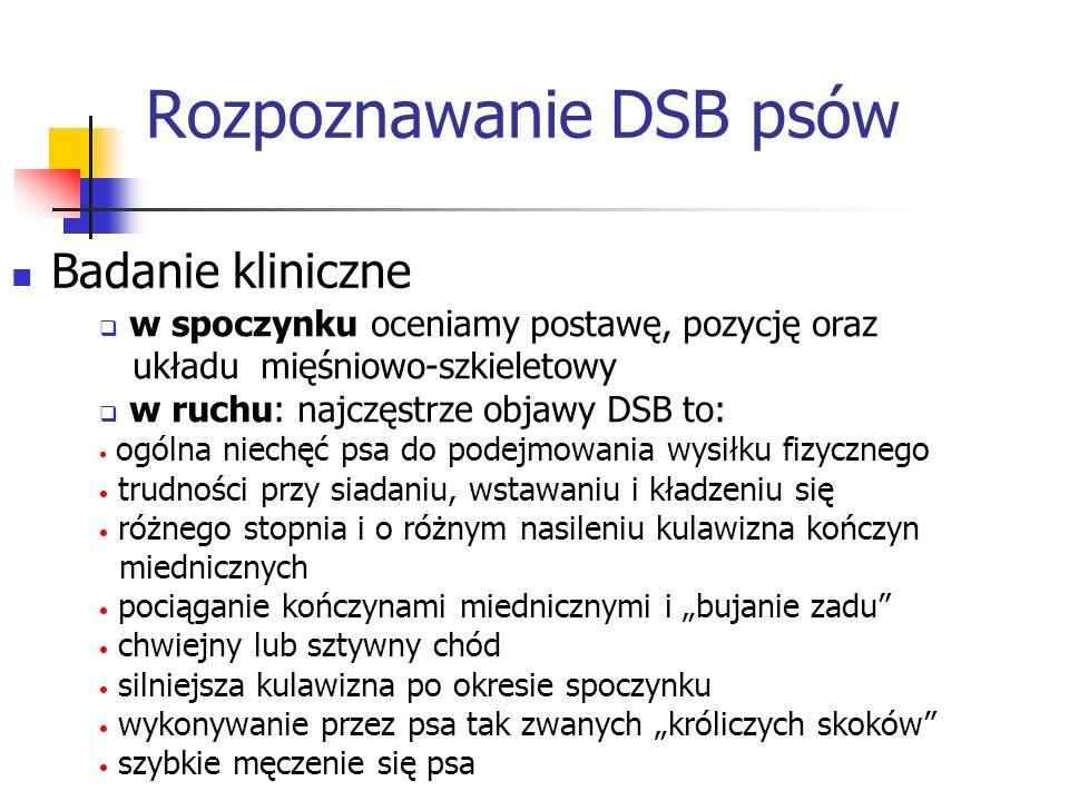 Rozpoznawanie DSB psów Badanie kliniczne w spoczynku oceniamy postawę, pozycję oraz układu mięśniowo-szkieletowy w ruchu: najczęstrze objawy DSB to: o