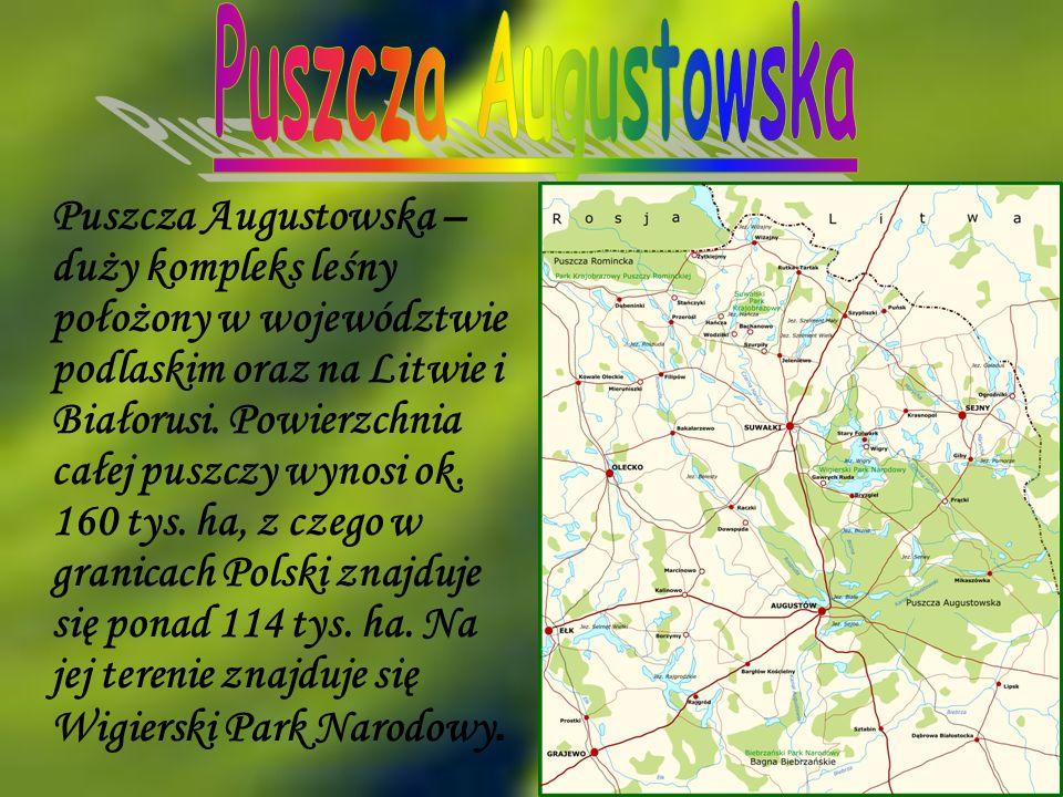 Puszcza Augustowska – duży kompleks leśny położony w województwie podlaskim oraz na Litwie i Białorusi. Powierzchnia całej puszczy wynosi ok. 160 tys.