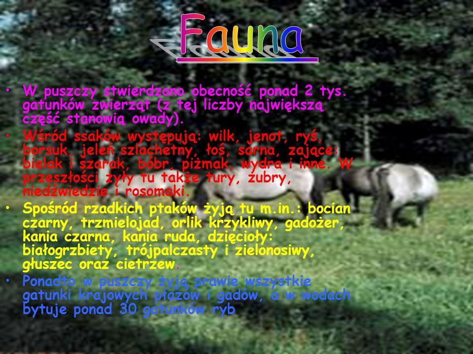 W puszczy stwierdzono obecność ponad 2 tys. gatunków zwierząt (z tej liczby największą część stanowią owady). Wśród ssaków występują: wilk, jenot, ryś