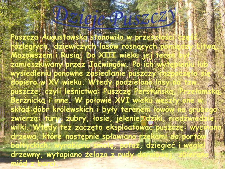 Puszcza Augustowska stanowiła w przeszłości część rozległych, dziewiczych lasów rosnących pomiędzy Litwą, Mazowszem i Rusią. Do XIII wieku jej teren b