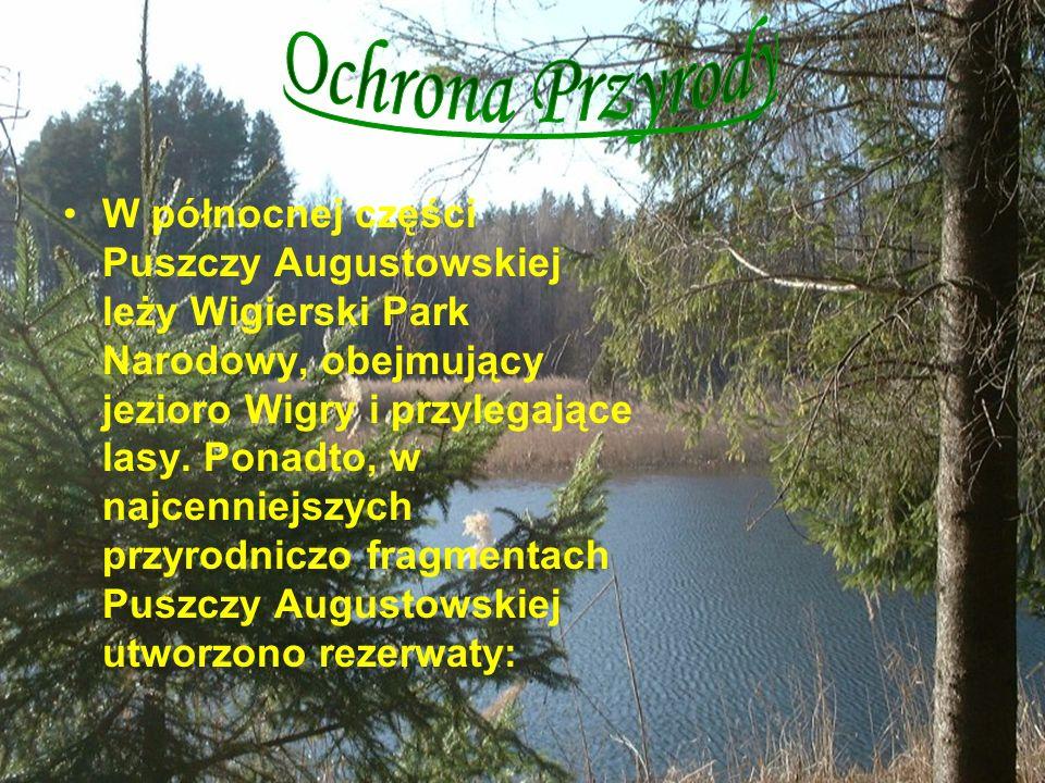 W północnej części Puszczy Augustowskiej leży Wigierski Park Narodowy, obejmujący jezioro Wigry i przylegające lasy. Ponadto, w najcenniejszych przyro