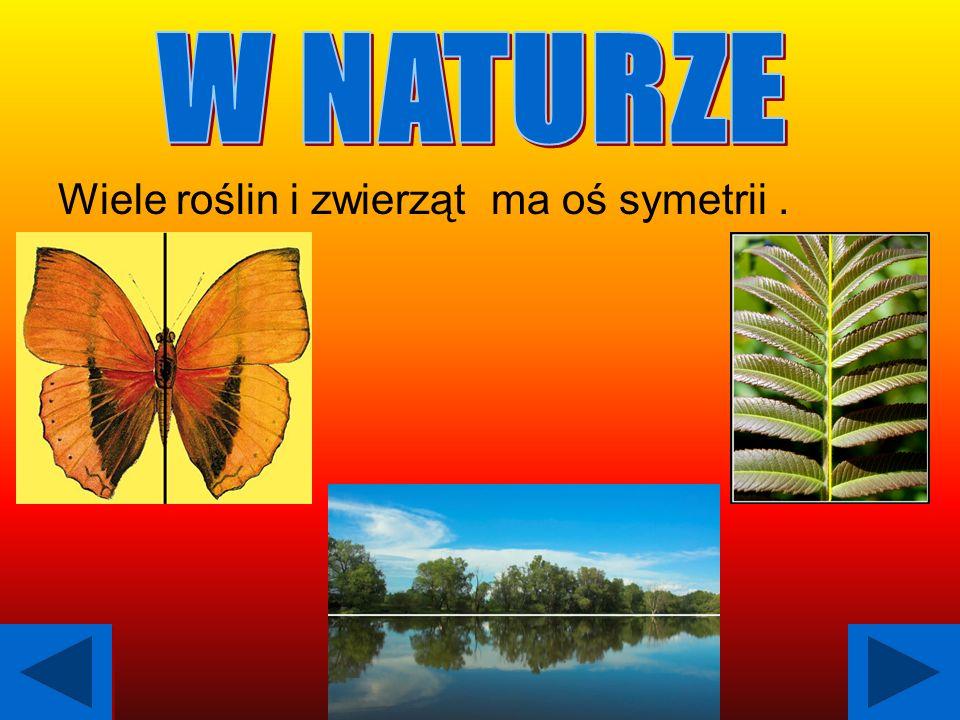 Wiele roślin i zwierząt ma oś symetrii.