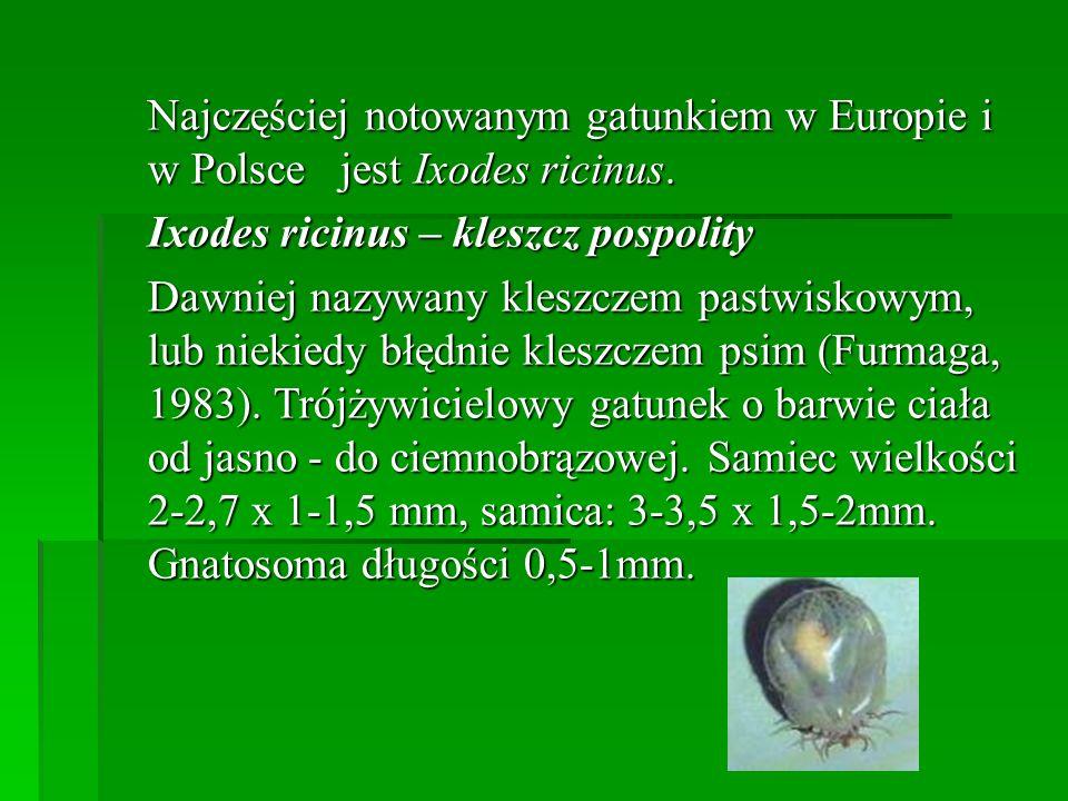 Najczęściej notowanym gatunkiem w Europie i w Polsce jest Ixodes ricinus. Najczęściej notowanym gatunkiem w Europie i w Polsce jest Ixodes ricinus. Ix