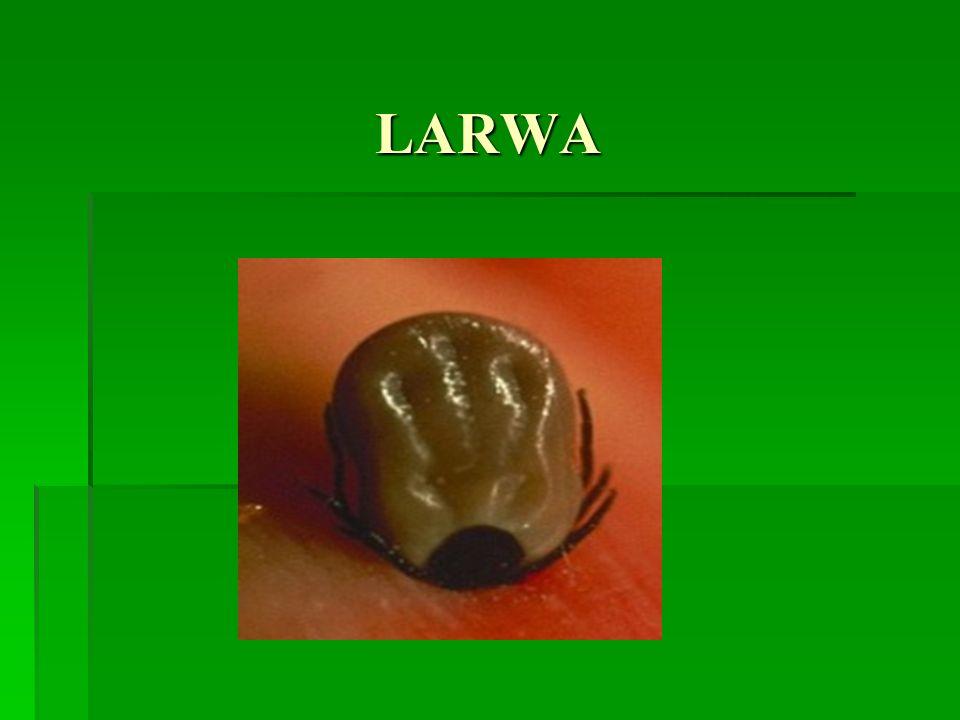 LARWA