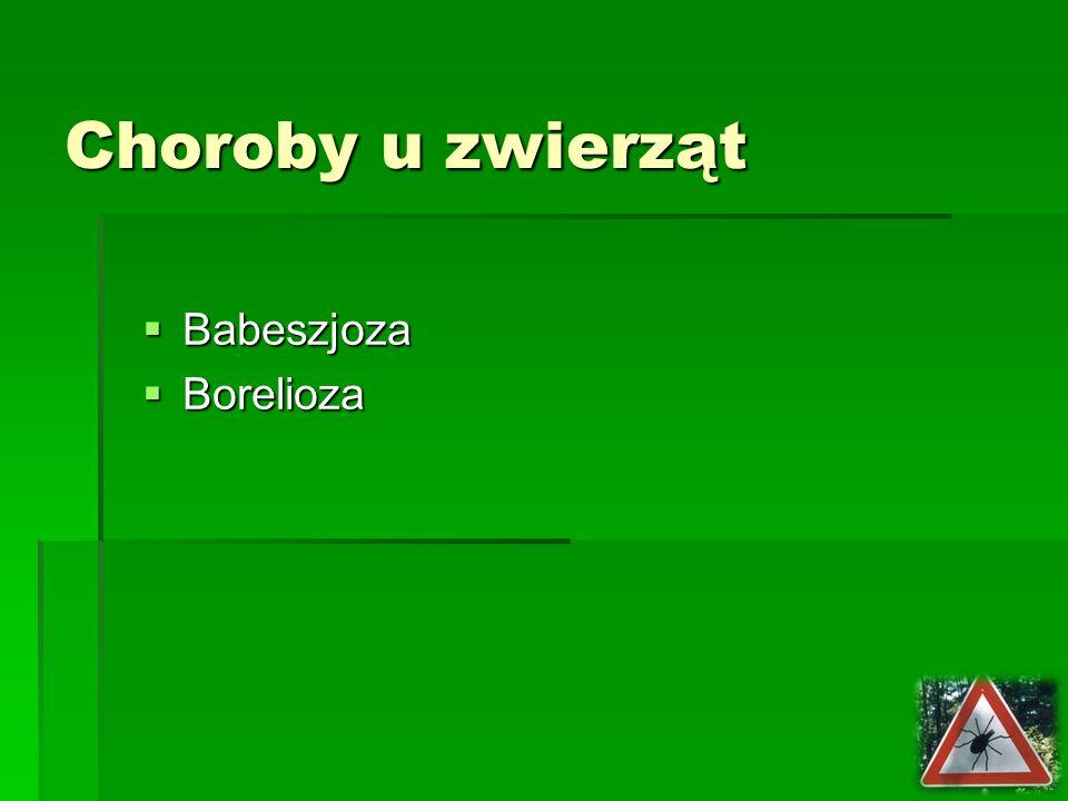 Choroby u zwierząt Babeszjoza Babeszjoza Borelioza Borelioza