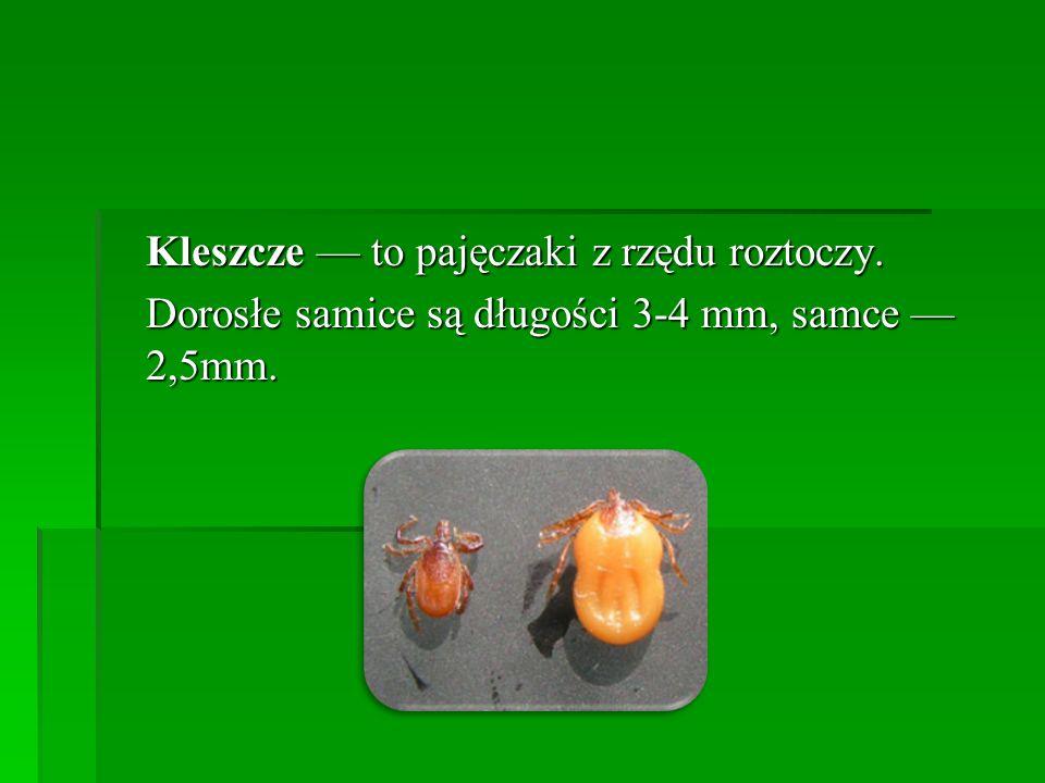 Kleszcze to pajęczaki z rzędu roztoczy. Dorosłe samice są długości 3-4 mm, samce 2,5mm.