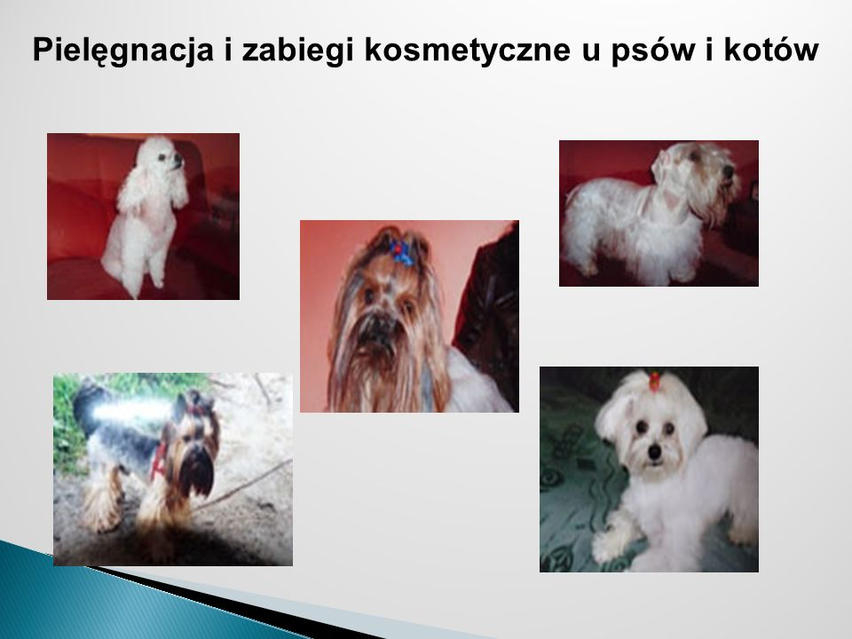 Pielęgnacja i zabiegi kosmetyczne u psów i kotów