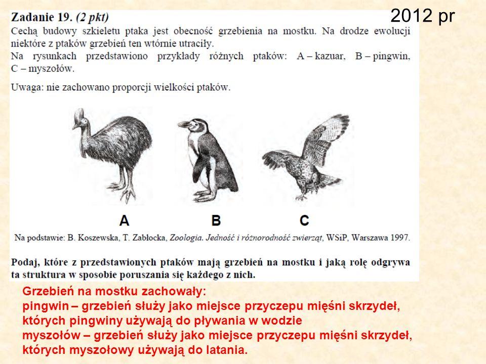 2012 pr Grzebień na mostku zachowały: pingwin – grzebień służy jako miejsce przyczepu mięśni skrzydeł, których pingwiny używają do pływania w wodzie m