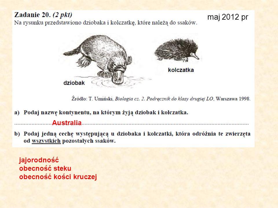 maj 2012 pr Australia jajorodność obecność steku obecność kości kruczej