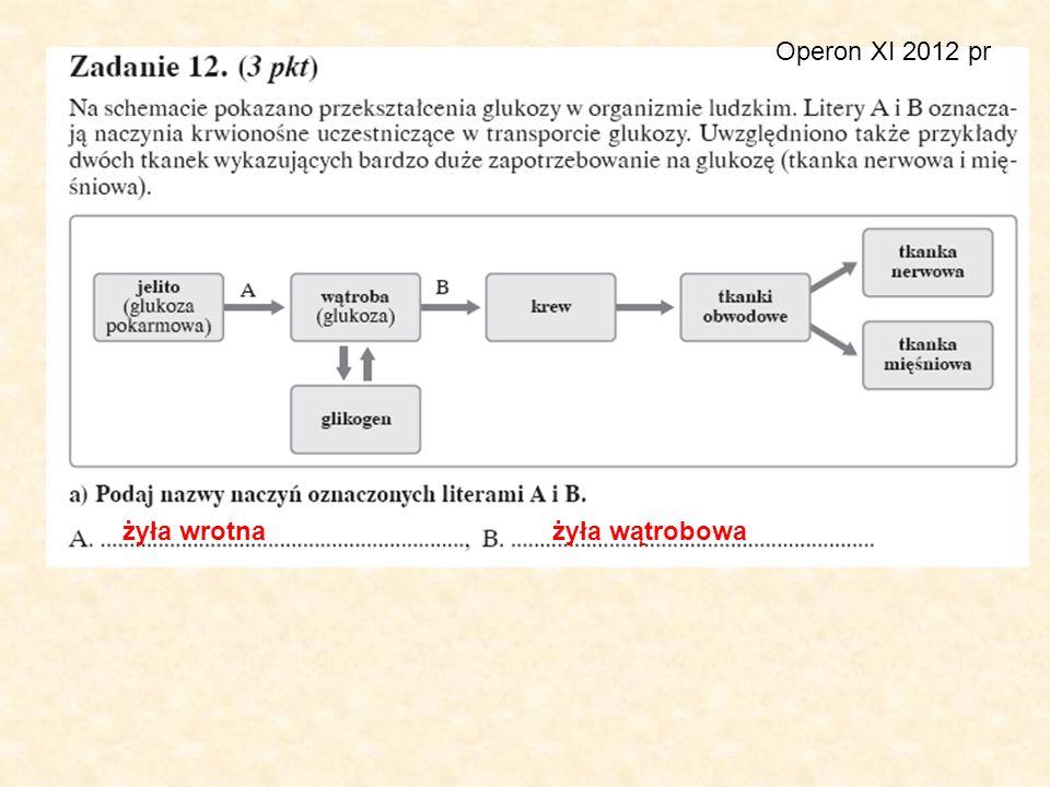 Operon XI 2012 pr żyła wrotnażyła wątrobowa