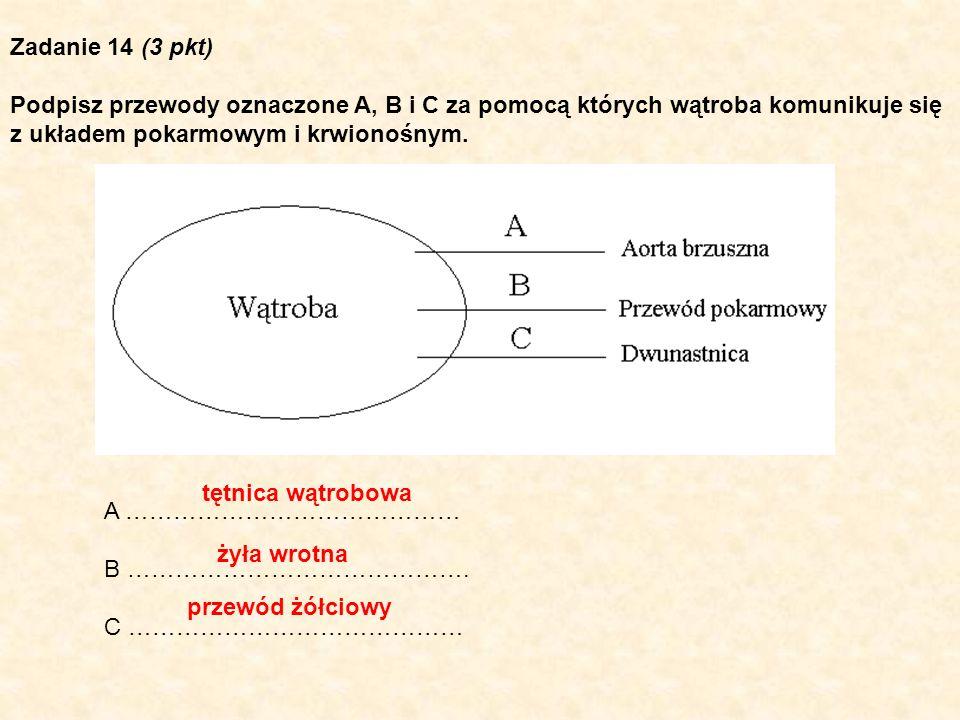 Zadanie 14 (3 pkt) Podpisz przewody oznaczone A, B i C za pomocą których wątroba komunikuje się z układem pokarmowym i krwionośnym. A …………………………………… B