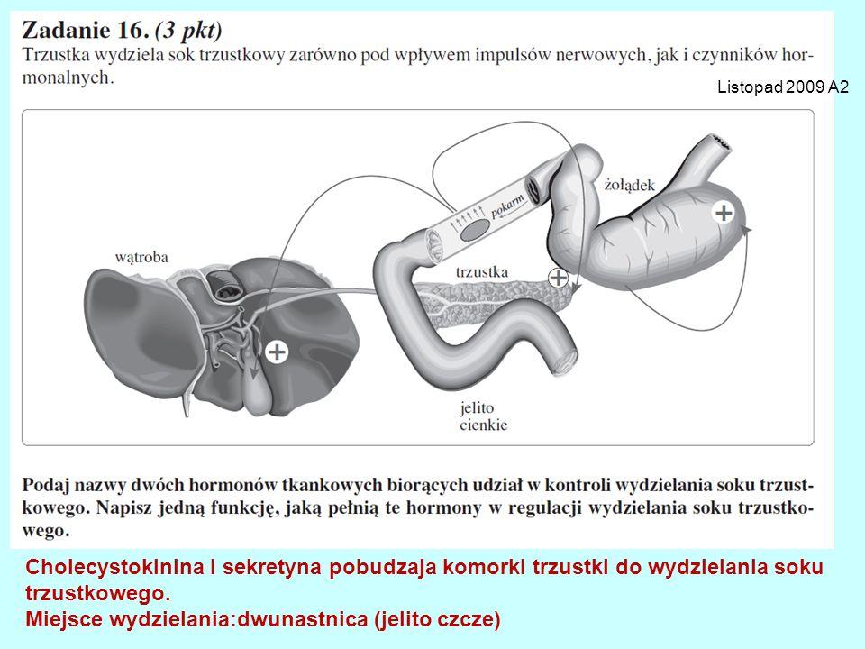 Listopad 2009 A2 Cholecystokinina i sekretyna pobudzaja komorki trzustki do wydzielania soku trzustkowego. Miejsce wydzielania:dwunastnica (jelito czc