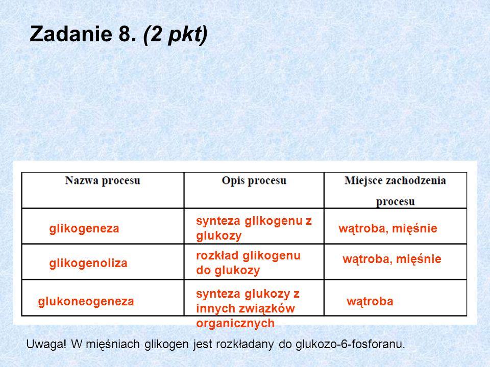Zadanie 8. (2 pkt) glikogeneza synteza glikogenu z glukozy wątroba, mięśnie glikogenoliza rozkład glikogenu do glukozy wątroba, mięśnie glukoneogeneza