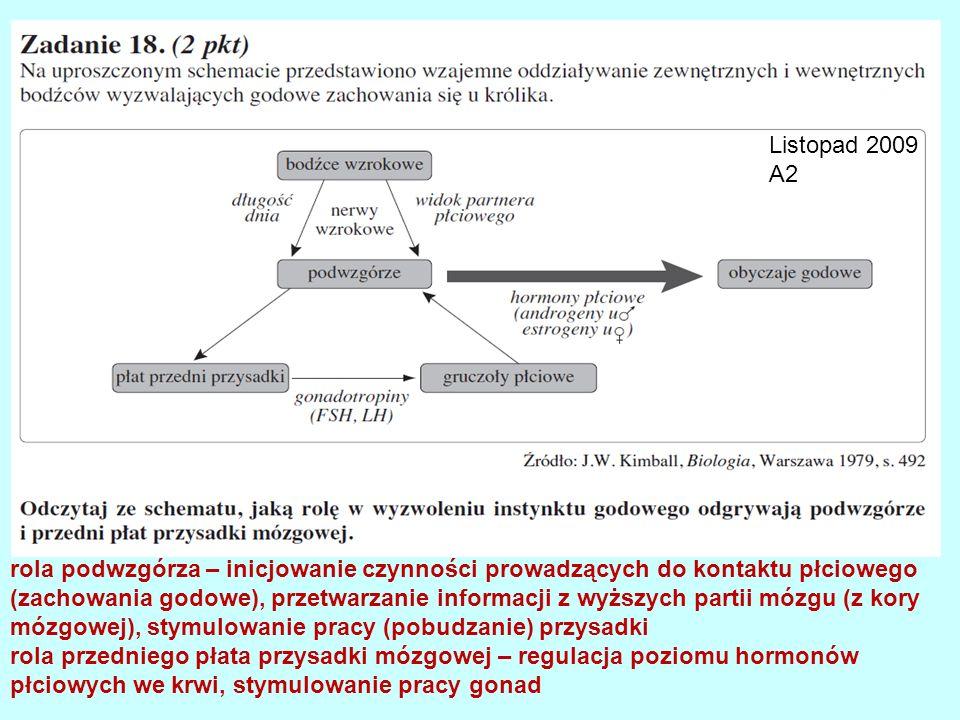 Listopad 2009 A2 rola podwzgórza – inicjowanie czynności prowadzących do kontaktu płciowego (zachowania godowe), przetwarzanie informacji z wyższych p
