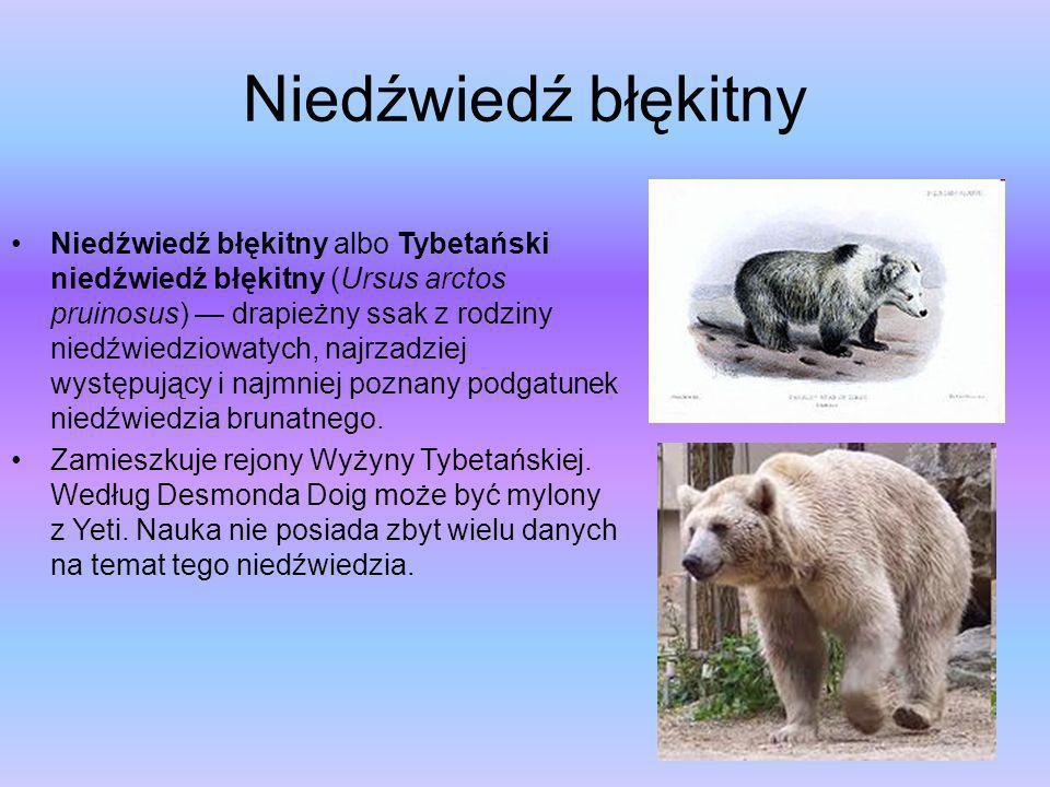 Niedźwiedź jaskiniowy (Ursus spelaeus) – gatunek niedźwiedzia, zamieszkującego Europę w okresie plejstocenu ok. 300 tysięcy lat temu i wymarłego pod k