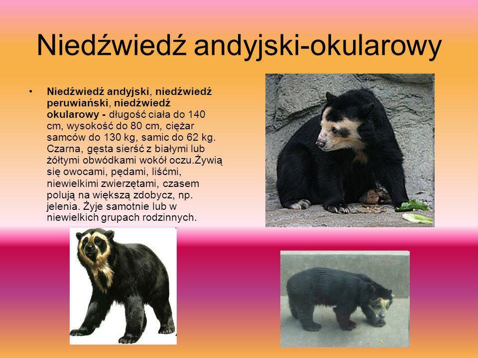 Niedźwiedź błękitny Niedźwiedź błękitny albo Tybetański niedźwiedź błękitny (Ursus arctos pruinosus) drapieżny ssak z rodziny niedźwiedziowatych, najr
