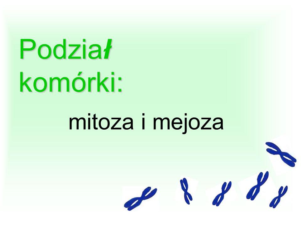 Podział komórki: mitoza i mejoza