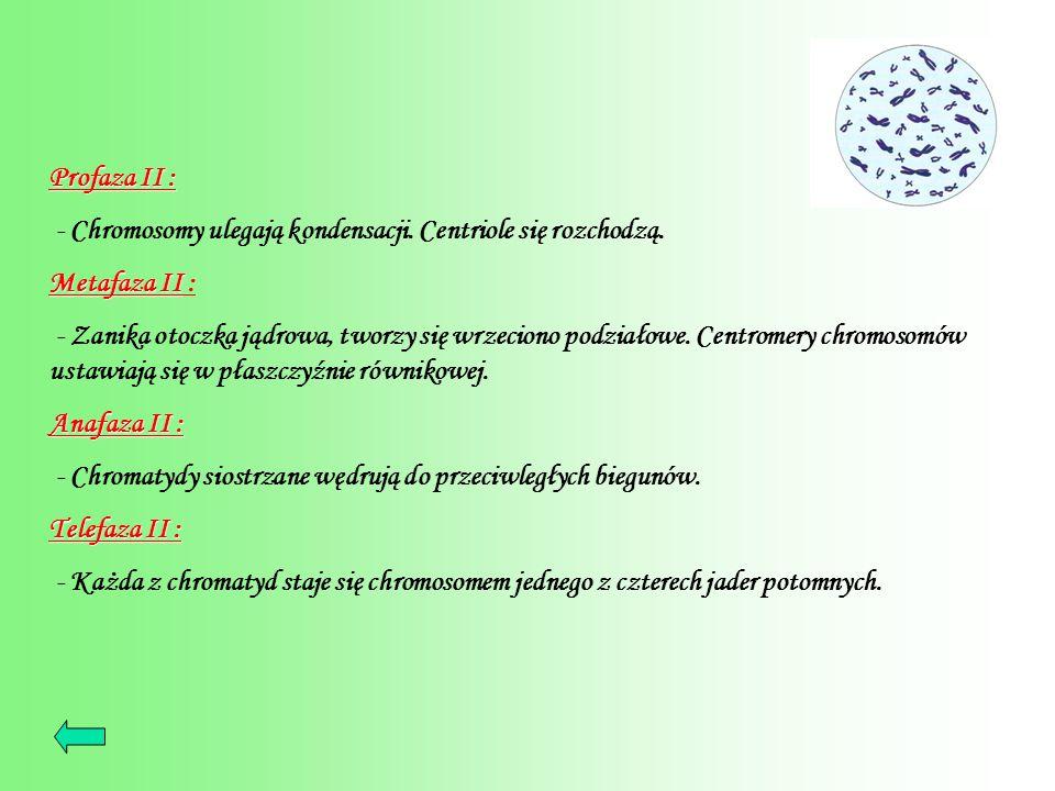 Profaza II : Profaza II : - Chromosomy ulegają kondensacji. Centriole się rozchodzą. Metafaza II Metafaza II : - Zanika otoczka jądrowa, tworzy się wr
