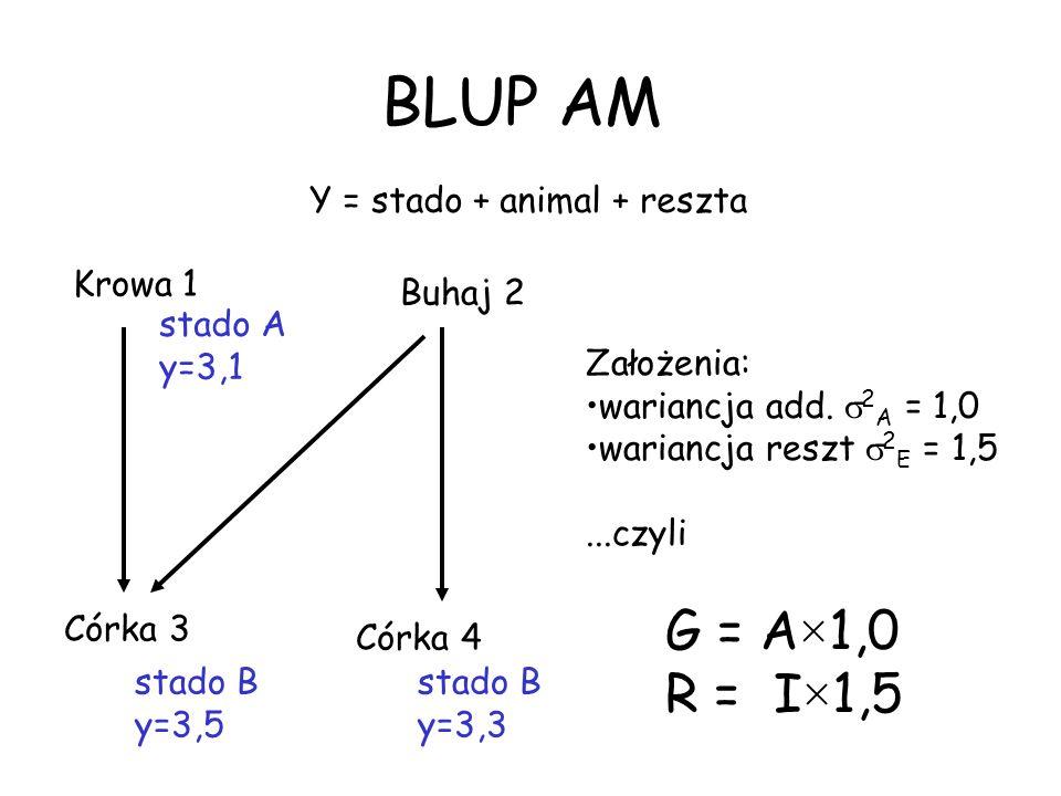 BLUP AM Krowa 1 Buhaj 2 Córka 3 Córka 4 stado A y=3,1 stado B y=3,5 stado B y=3,3 Założenia: wariancja add. 2 A = 1,0 wariancja reszt 2 E = 1,5...czyl