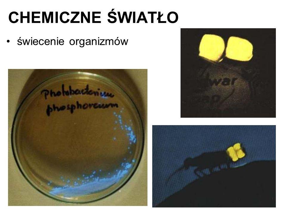 CHEMICZNE ŚWIATŁO świecenie organizmów