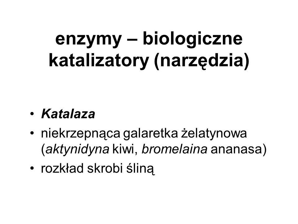enzymy – biologiczne katalizatory (narzędzia) Katalaza niekrzepnąca galaretka żelatynowa (aktynidyna kiwi, bromelaina ananasa) rozkład skrobi śliną