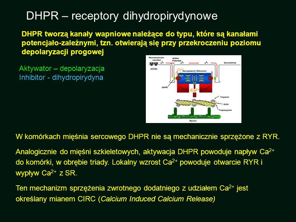 DHPR tworzą kanały wapniowe należące do typu, które są kanałami potencjało-zależnymi, tzn. otwierają się przy przekroczeniu poziomu depolaryzacji prog