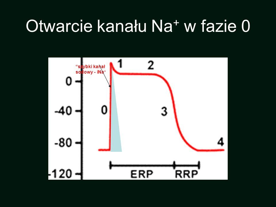 szybki kanał sodowy - iNa + Otwarcie kanału Na + w fazie 0