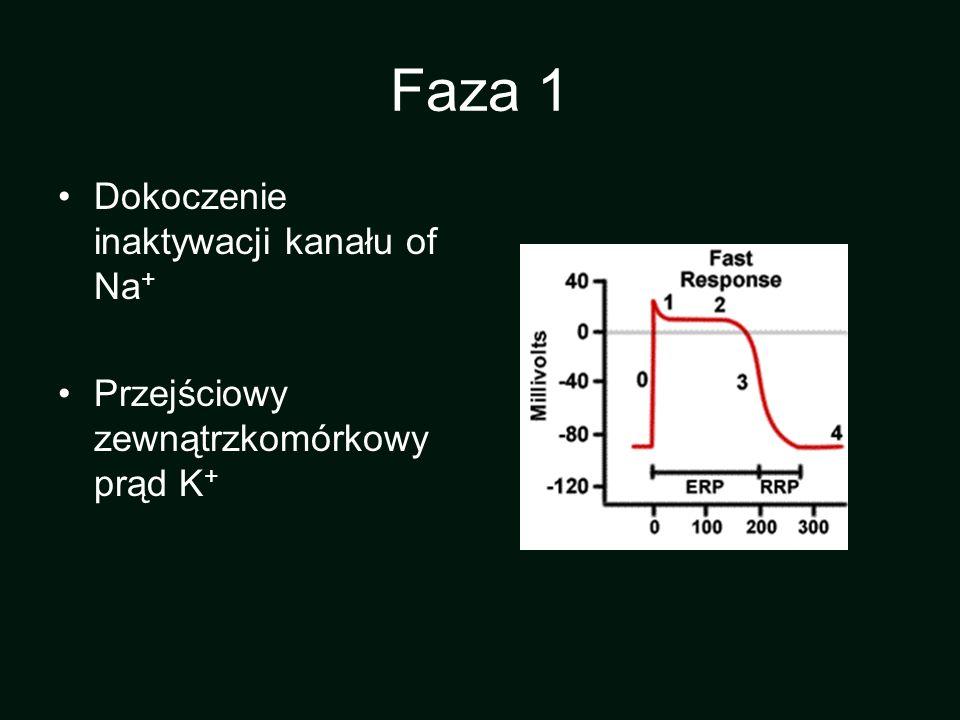 Faza 1 Dokoczenie inaktywacji kanału of Na + Przejściowy zewnątrzkomórkowy prąd K +