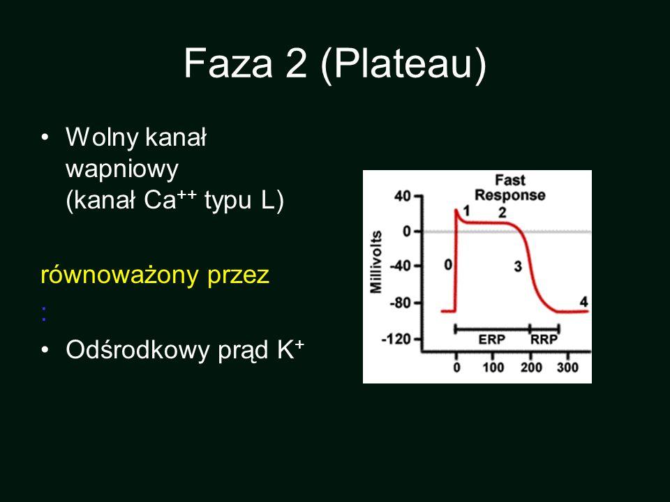 Faza 2 (Plateau) Wolny kanał wapniowy (kanał Ca ++ typu L) równoważony przez : Odśrodkowy prąd K +