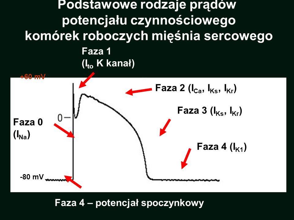 -80 mV +60 mV Faza 0 (I Na ) Faza 2 (I Ca, I Ks, I Kr ) Faza 1 (I to K kanał) Faza 4 (I K1 ) Faza 4 – potencjał spoczynkowy Faza 3 (I Ks, I Kr ) Podst