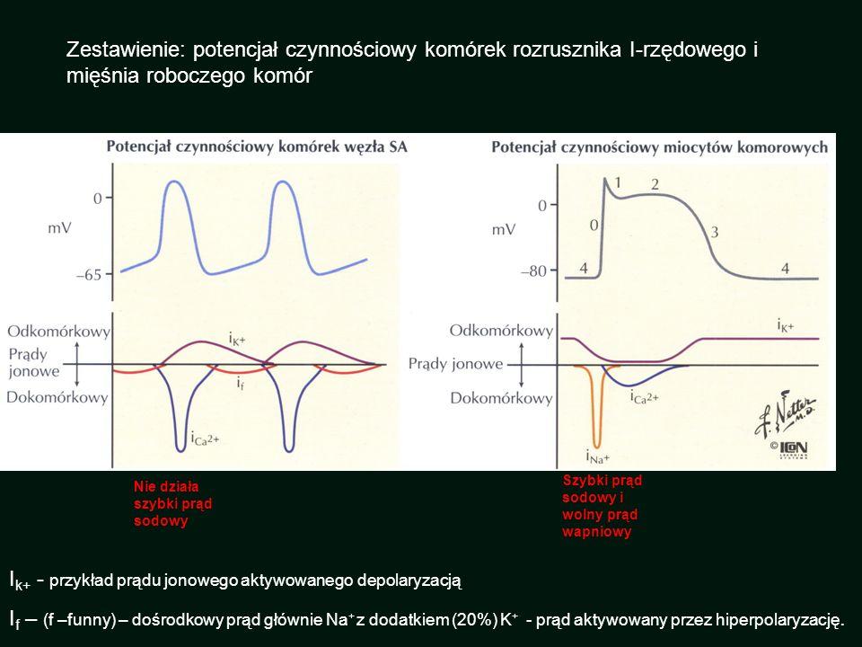 Zestawienie: potencjał czynnościowy komórek rozrusznika I-rzędowego i mięśnia roboczego komór I k+ - przykład prądu jonowego aktywowanego depolaryzacj