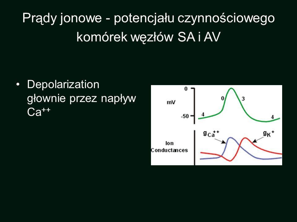 Depolarization głownie przez napływ Ca ++ Prądy jonowe - potencjału czynnościowego komórek węzłów SA i AV