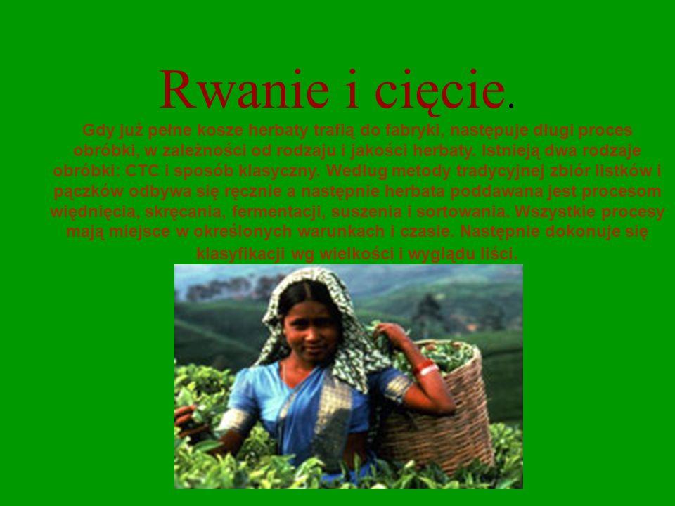Klonowanie. Mało kto wie, że dzisiaj już nie jest rozmnażana z nasion tylko poprzez rozkrzewianie wegetatywne z sadzonek oraz dzięki takiej dziedzinie