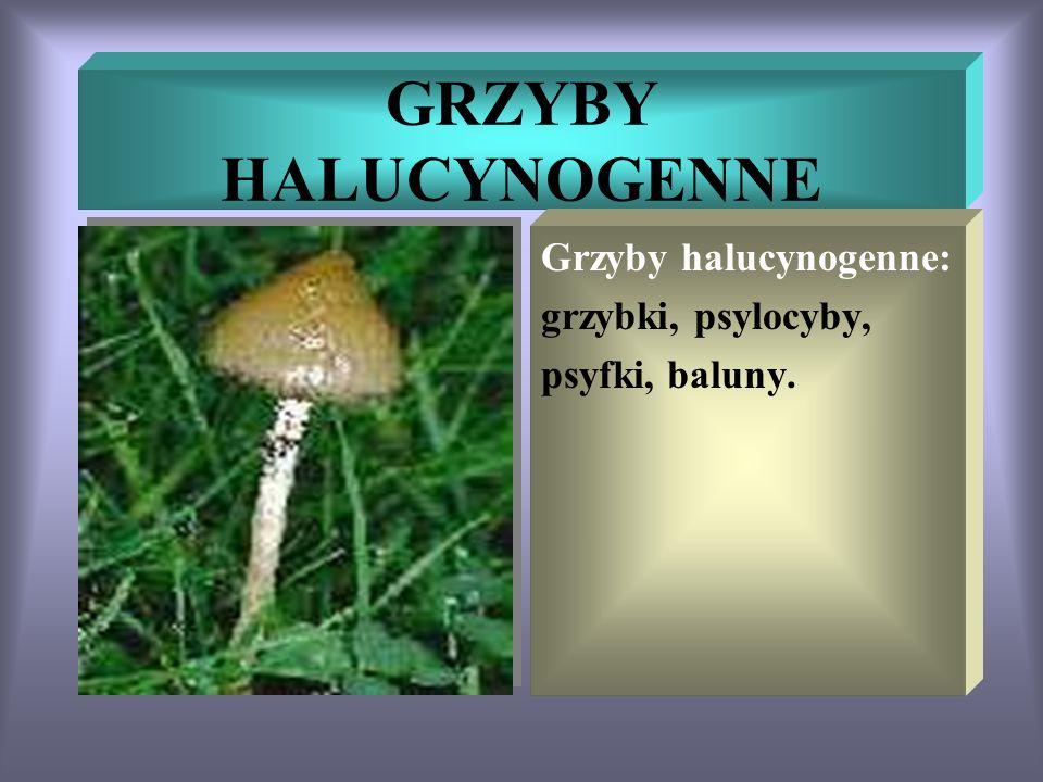 GRZYBY HALUCYNOGENNE Grzyby halucynogenne: grzybki, psylocyby, psyfki, baluny.