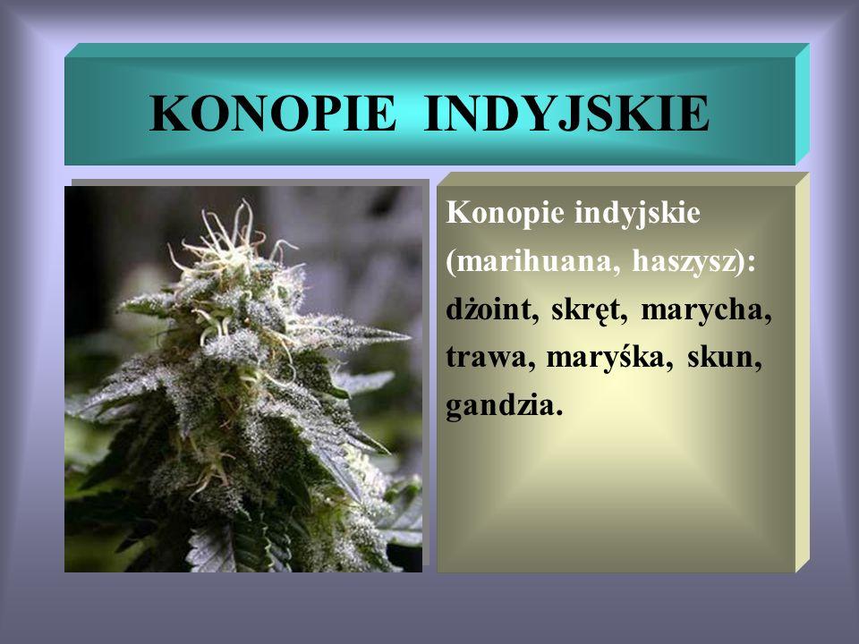 KONOPIE INDYJSKIE Konopie indyjskie (marihuana, haszysz): dżoint, skręt, marycha, trawa, maryśka, skun, gandzia.