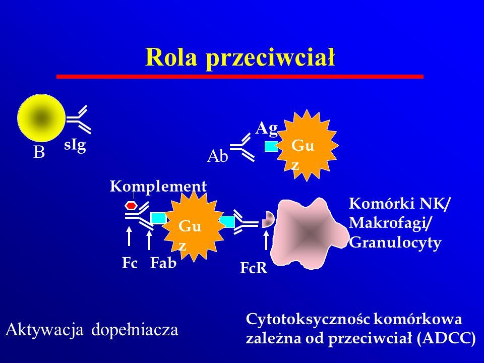 Rola przeciwciał Komplement Komórki NK/ Makrofagi/ Granulocyty FcR FabFc Cytotoksycznośc komórkowa zależna od przeciwciał (ADCC) Ag Ab sIg B Aktywacja
