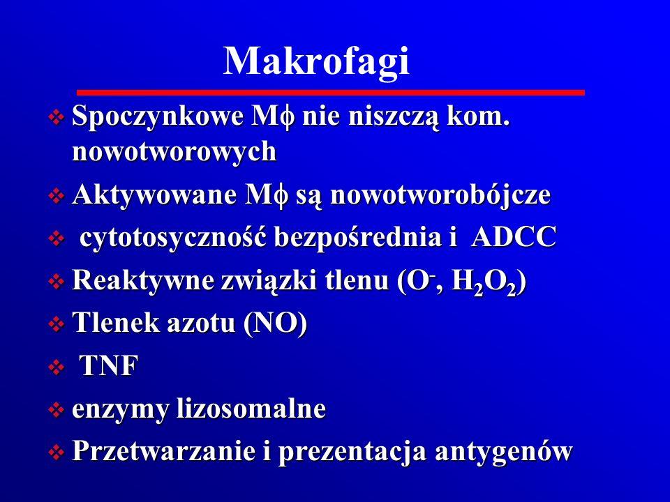 Makrofagi Spoczynkowe M nie niszczą kom. nowotworowych Spoczynkowe M nie niszczą kom. nowotworowych Aktywowane M są nowotworobójcze Aktywowane M są no