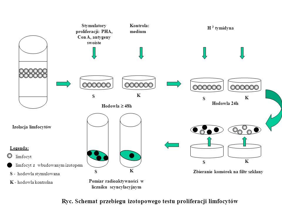 Izolacja limfocytów Hodowla 48h Hodowla 24h Stymulatory proliferacji: PHA, Con A, antygeny swoiste Kontrola: medium H 3 tymidyna Ryc. Schemat przebieg