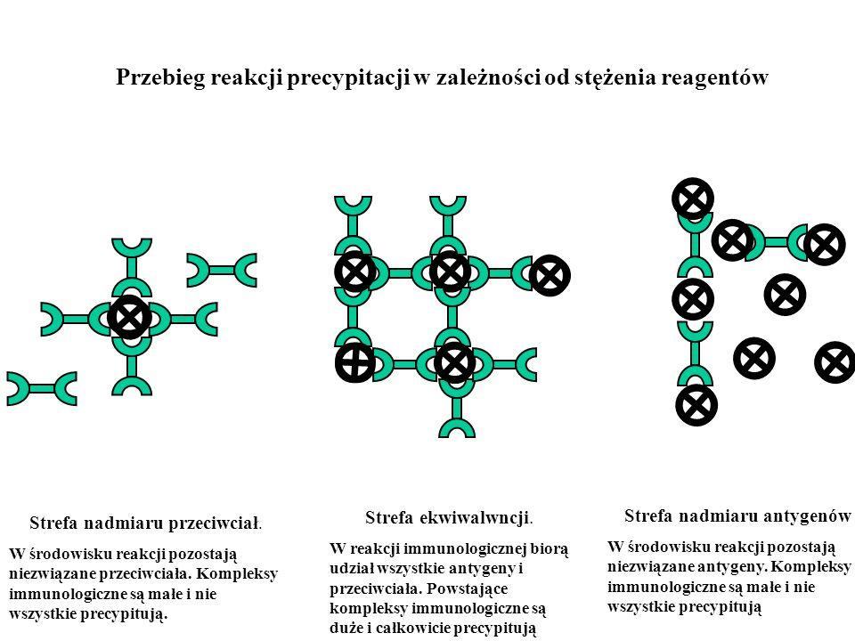 Przebieg reakcji precypitacji w zależności od stężenia reagentów Strefa nadmiaru przeciwciał. W środowisku reakcji pozostają niezwiązane przeciwciała.