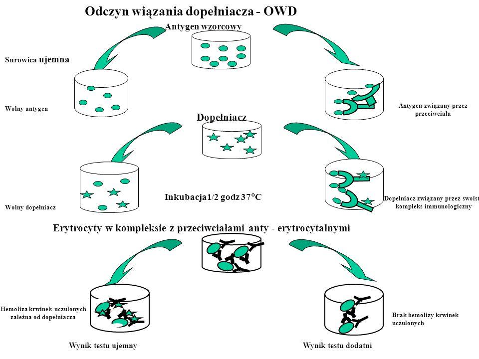 Antygen wzorcowy Inkubacja1/2 godz 37 C Wynik testu ujemnyWynik testu dodatni Surowica ujemna Wolny antygen Antygen związany przez przeciwciała Wolny
