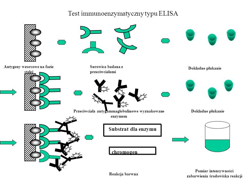 Antygeny wzorcowe na fazie stałej Surowica badana z przeciwciałami Dokładne płukanie Substrat dla enzymu chromogen Reakcja barwna Pomiar intensywności