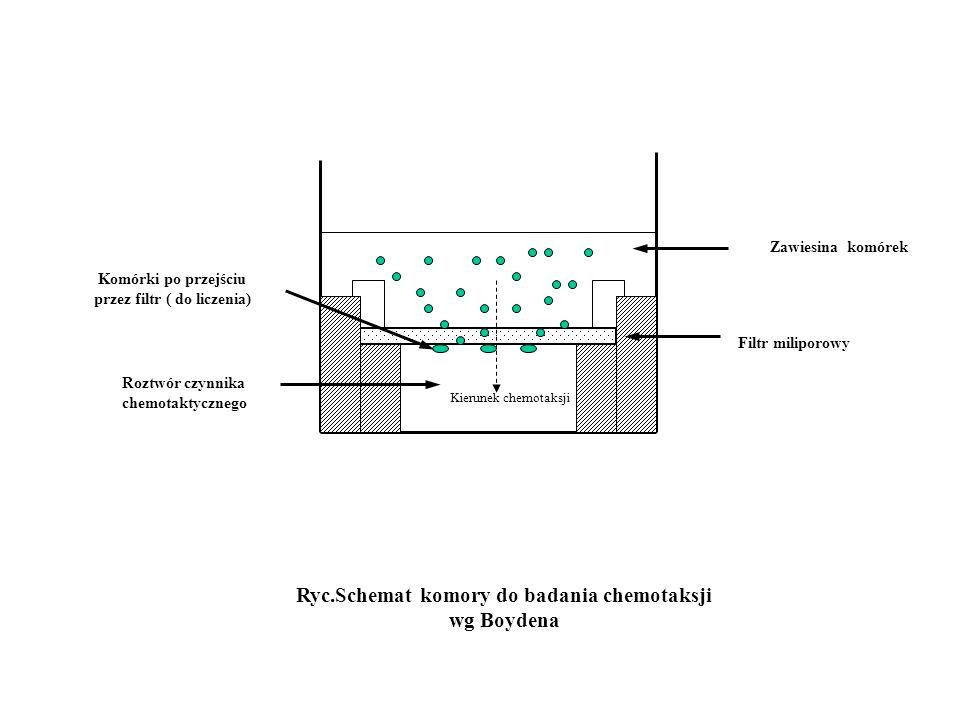 Zawiesina komórek Roztwór czynnika chemotaktycznego Filtr miliporowy Ryc.Schemat komory do badania chemotaksji wg Boydena Komórki po przejściu przez f
