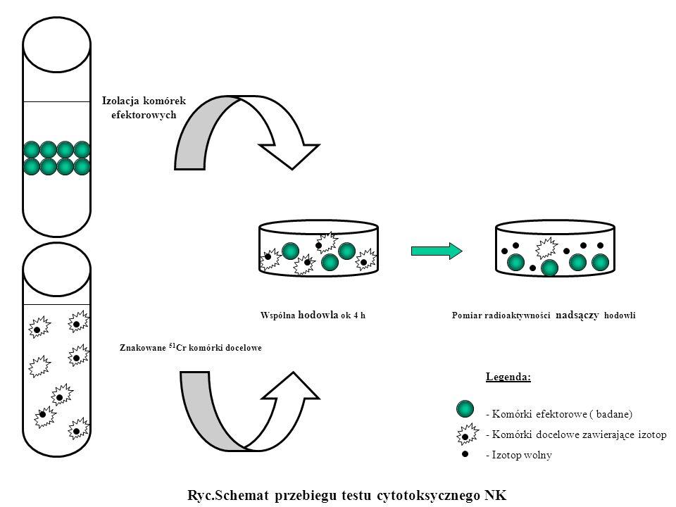 Znakowane 51 Cr komórki docelowe Wspólna hodowla ok 4 hPomiar radioaktywności nadsączy hodowli Izolacja komórek efektorowych Ryc.Schemat przebiegu tes