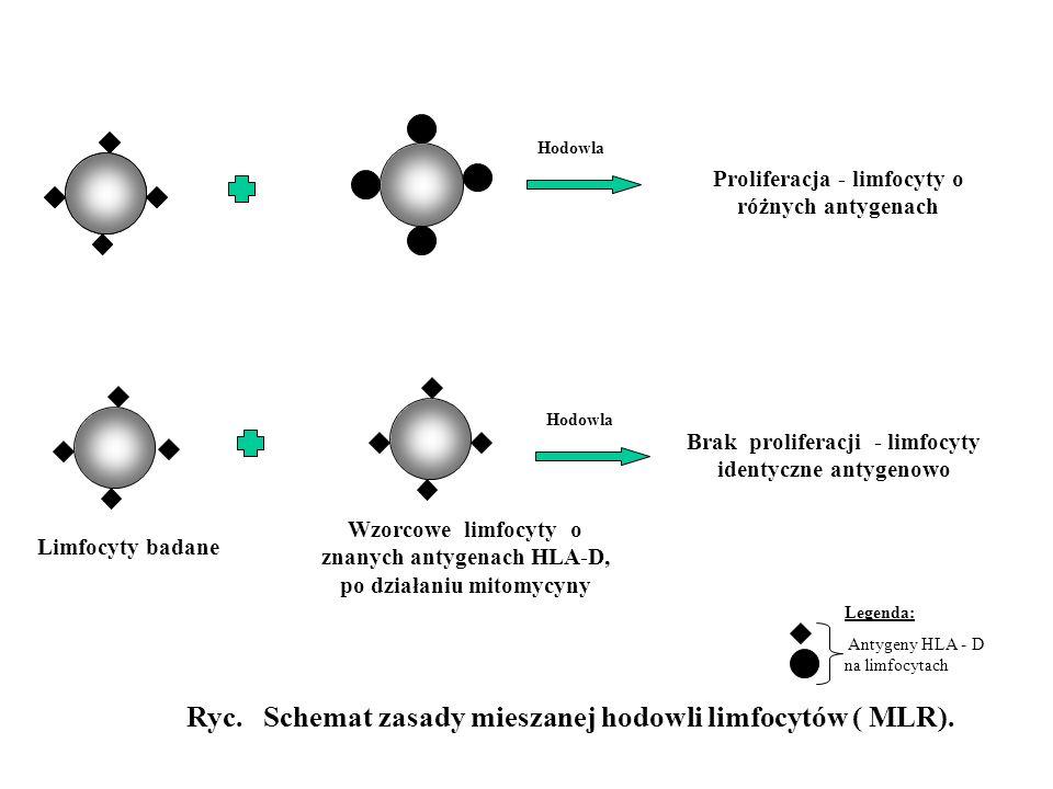 Limfocyty badane Wzorcowe limfocyty o znanych antygenach HLA-D, po działaniu mitomycyny Brak proliferacji - limfocyty identyczne antygenowo Hodowla Ry