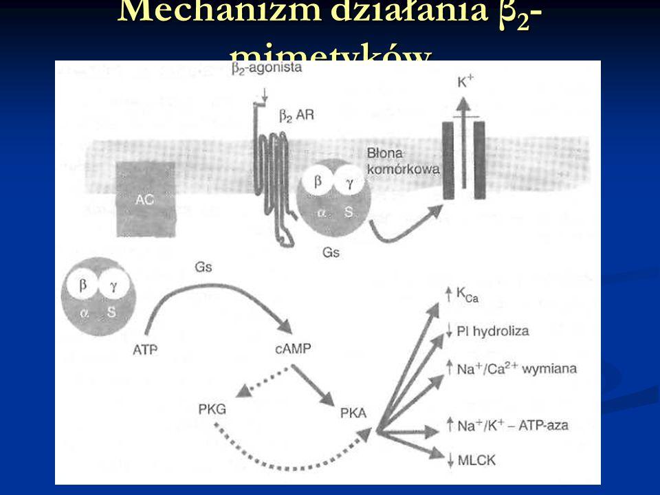 Mechanizm działania β 2 - mimetyków