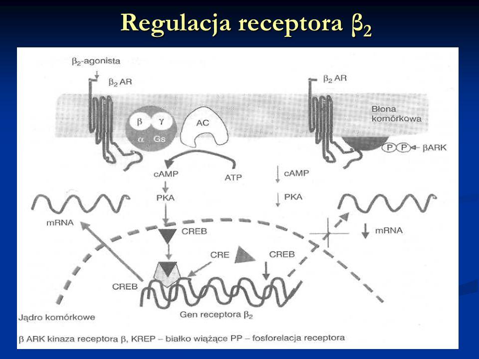 Regulacja receptora β 2