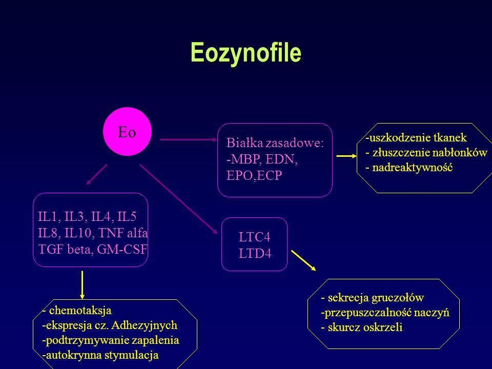 Eozynofile Eo Białka zasadowe: -MBP, EDN, EPO,ECP LTC4 LTD4 IL1, IL3, IL4, IL5 IL8, IL10, TNF alfa TGF beta, GM-CSF -uszkodzenie tkanek - złuszczenie
